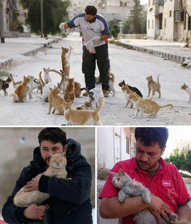 Люди бегут из разрушенного войной Алеппо. Но этот мужчина остался, чтобы заботиться о брошенных кошках Счастливый конец, животные, спасение
