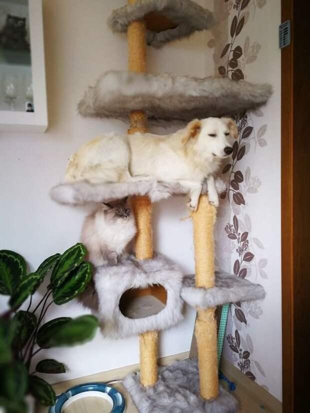 12 забавных фото собак, которые думают, что они кошки