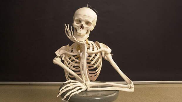Вопрос на засыпку: сколько в нас костей?