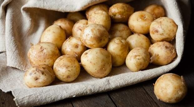 как выбрать картофель на рынке
