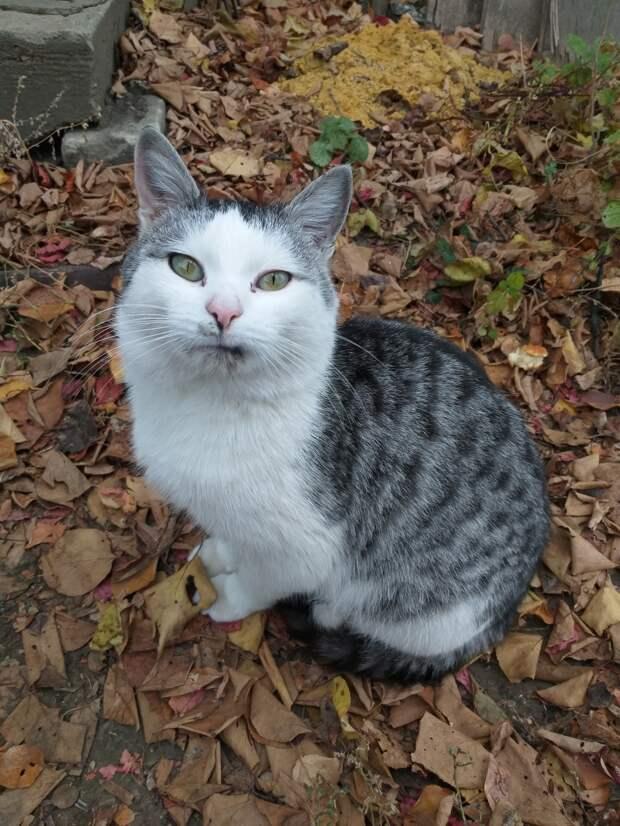 уличный кот
