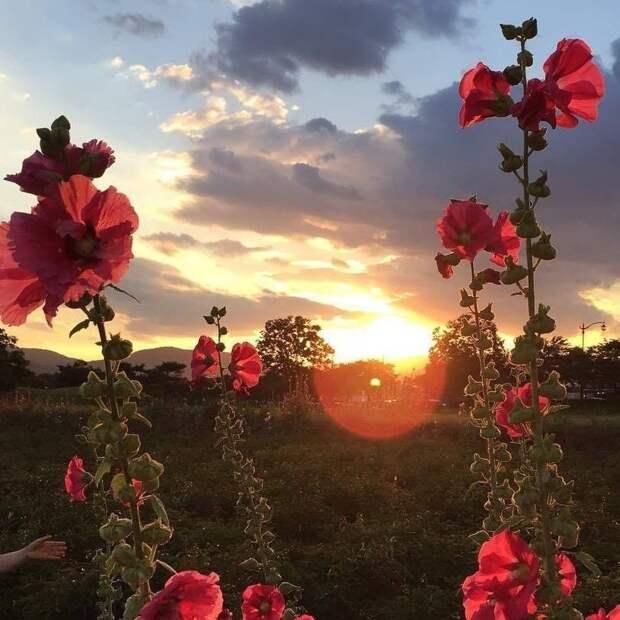 Красивые и завораживающие фотографии с картинками из сети