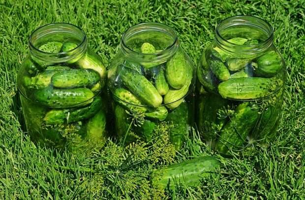 Маринуем огурцы: 7 советов от повара холодного цеха