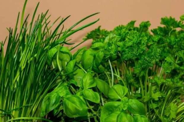 Секреты выращивания ранней зелени