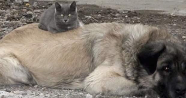 10 невероятных и необычных дружб животных