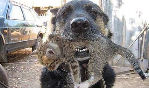Настоящий герой! Этот пес спас от пожара котят