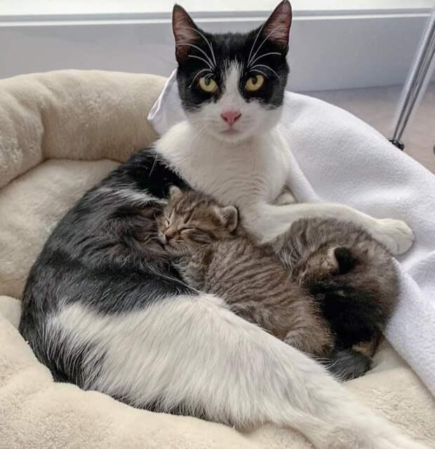 кошка с котятами