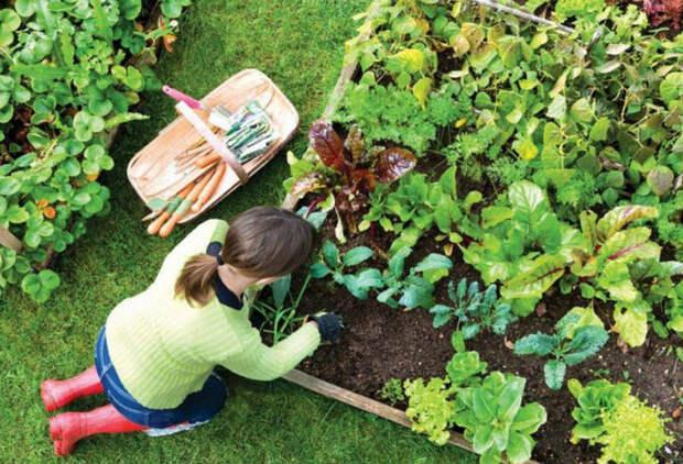 Растения, которые запрещено выращивать в саду
