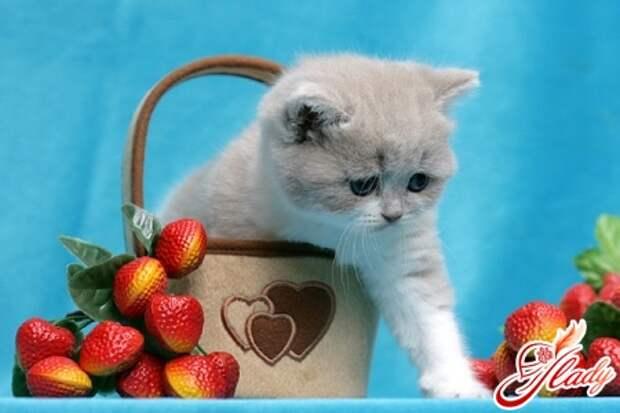 КОШКИН ДОМ. Что делать, если у кота перхоть?