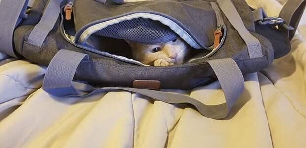 Кот-проныра Оливер, который залез всюду, куда можно и нельзя