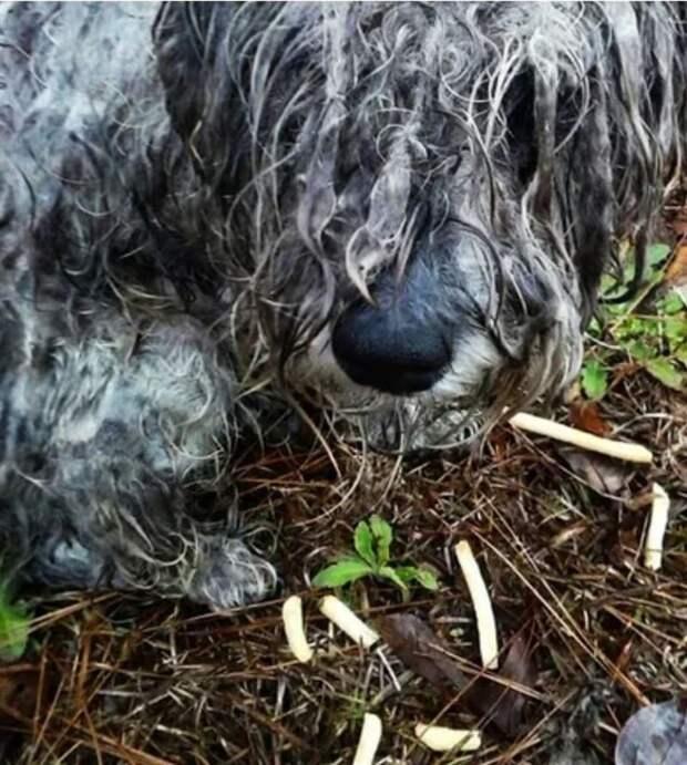 Привязанная к пню собака была при смерти