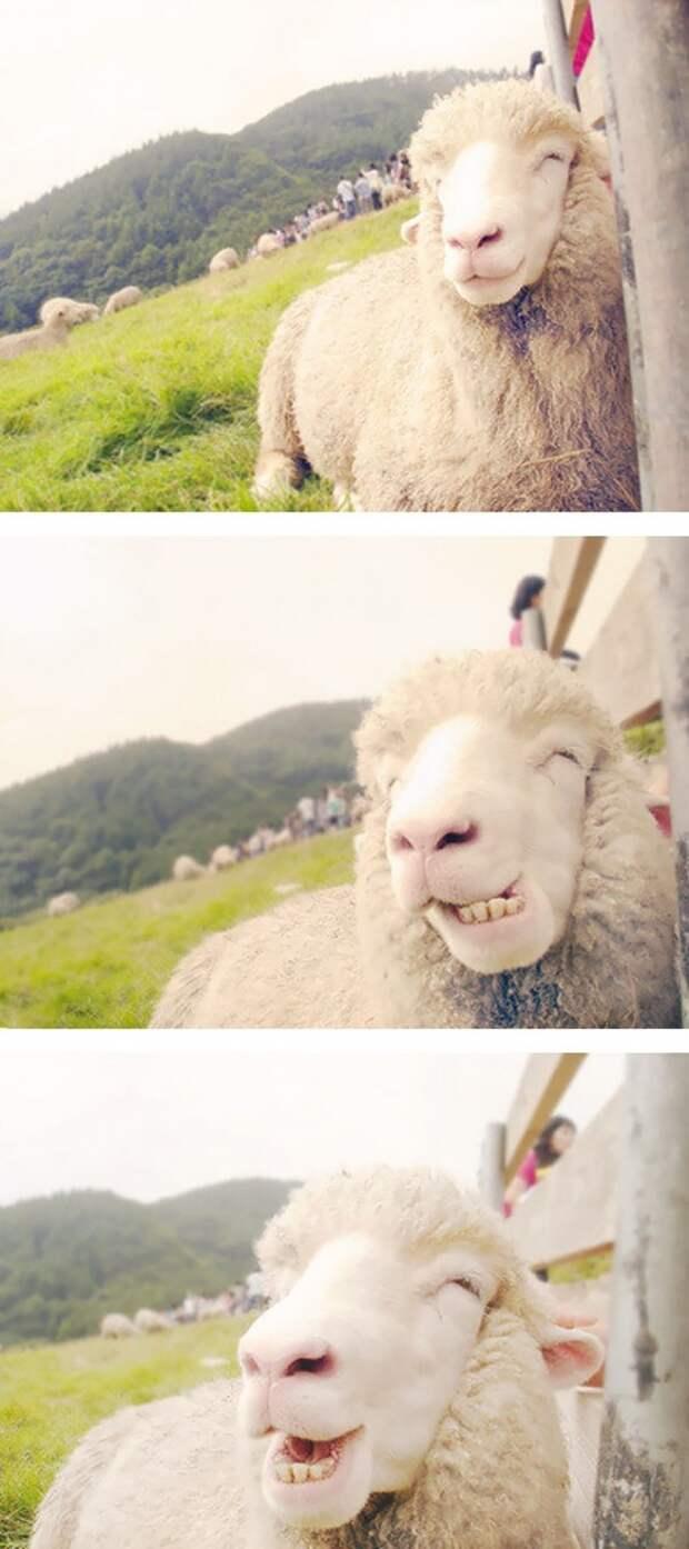 улыбающиеся животные, животные смеются