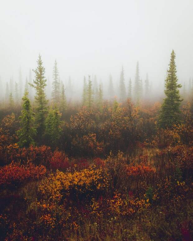 Природа Аляски на снимках Патрика Туна