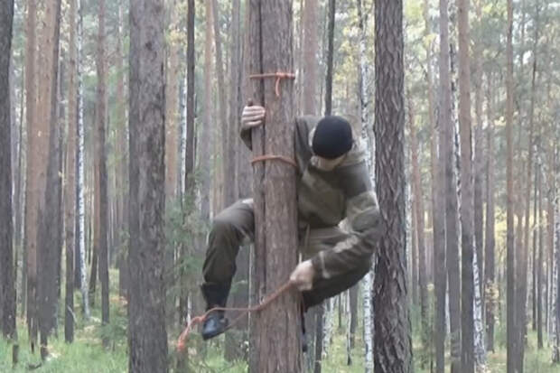 Как залезть на любое дерево