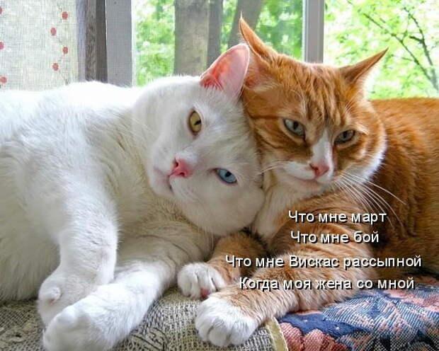 Мартовским котам посвящается! Как меняется жизнь мурлык с наступлением марта…))