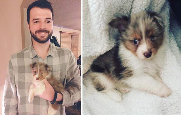 Мужчина, у которого видит лишь один глаз, купил одноглазого щенка, которого никто не хотел забирать  Счастливый конец, животные, спасение