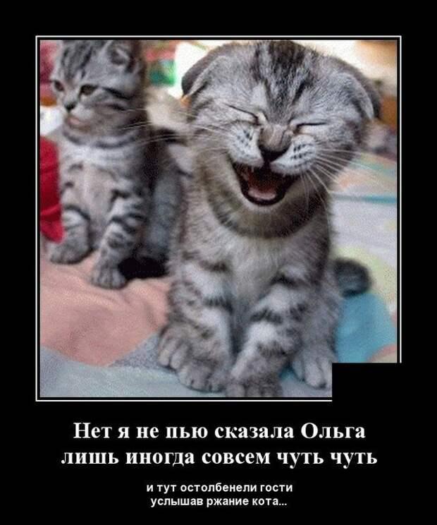 Демотиватор про котика