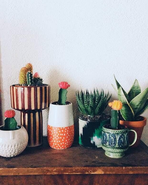 Крутое решение создать милые горшочки с симпатичными комнатными цветами.