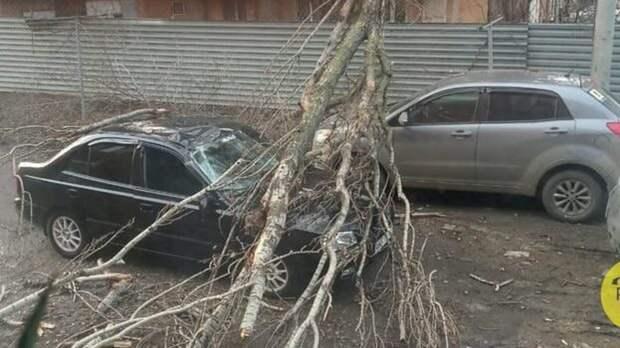 Кто возместит: дерево примяло сразу две припаркованные иномарки в Ростове
