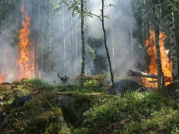 Площадь лесных пожаров в России за выходные сократилась почти втрое
