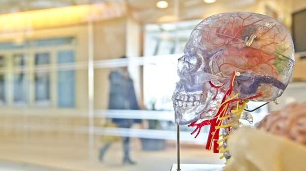 Обнаруженная странная особенность работы головного мозга