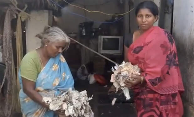 Все сбережения свиновода съели муравьи