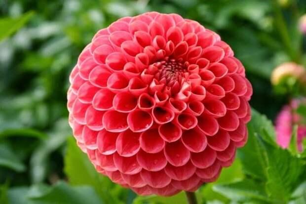Райский сад перфекциониста геометрия растений