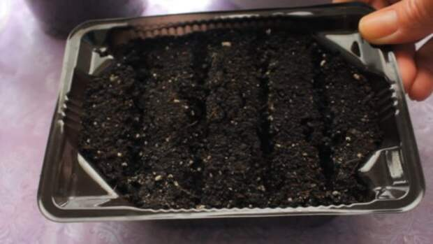 Необычный способ посеять мелкие семена с гарантированным результатом