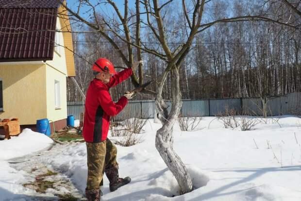 Что делать огороднику в теплую зиму