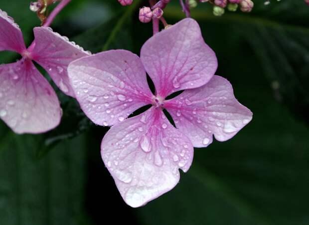 Суббота в Удмуртии будет еще теплой, но дождливой
