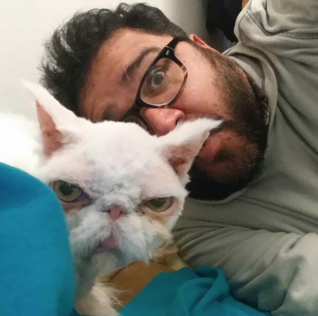 Мужчина, изначально взявший Синдбада только на передержку, уже навсегда забрал его домой кот, преображение, стрижка, шерсть