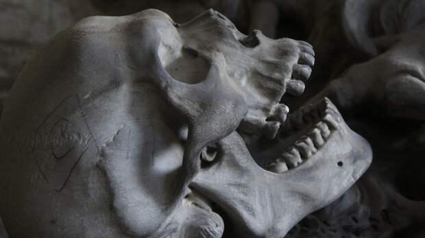 Охотник нашел человеческие останки в лесу под Рязанью