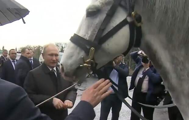 Путину в Киргизии подарили коня и щенка