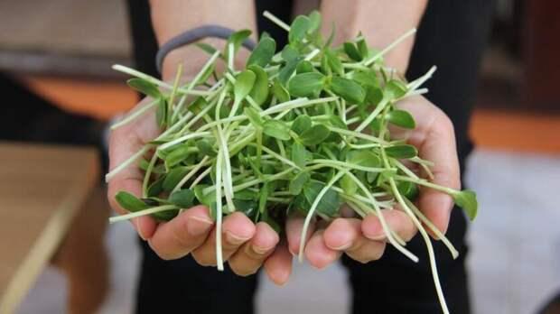 Школьники вРостовской области разработали систему выращивания микрозелени