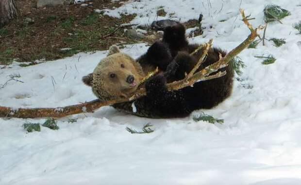 Его лапы никогда не касались травы, а глаза не видели солнца! Медведь, всю жизнь сидевший на цепи, не перестает радоваться…