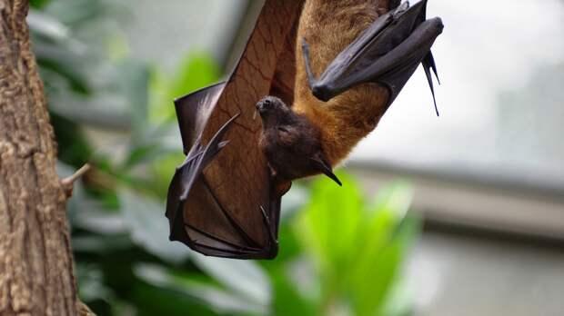 Китайские ученые выявили более 20 новых видов коронавируса у летучих мышей