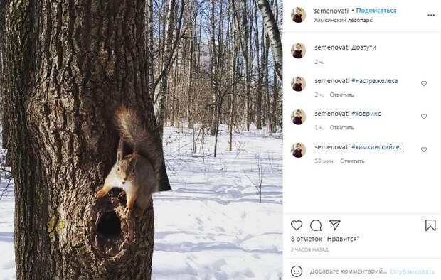Фото дня: в Химкинском лесопарке запечатлели пушистого стражника
