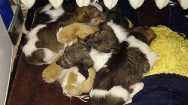 Пятерых щенков выбросили в поле, и только случайные прохожие помогли им выжить