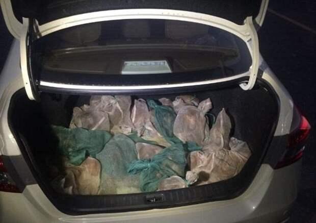 Вот что полицейские нашли в багажнике этих браконьеров