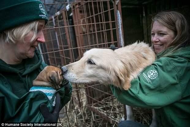 Большинство животных, содержавшихся на ферме, отправили в приюты США, Канады, Великобритании. животные, защитники животных, новости, собаки, спасение, фото, щенки, южная корея