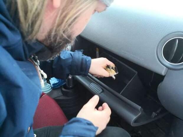 Журналистка получила задание разыскать хозяев найденного хомяка. Но это оказался совсем иной зверь!