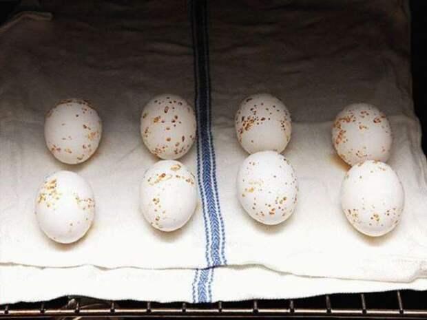 Как сварить куриные яйца, чтобы не растекался желток и легко чистилась скорлупа