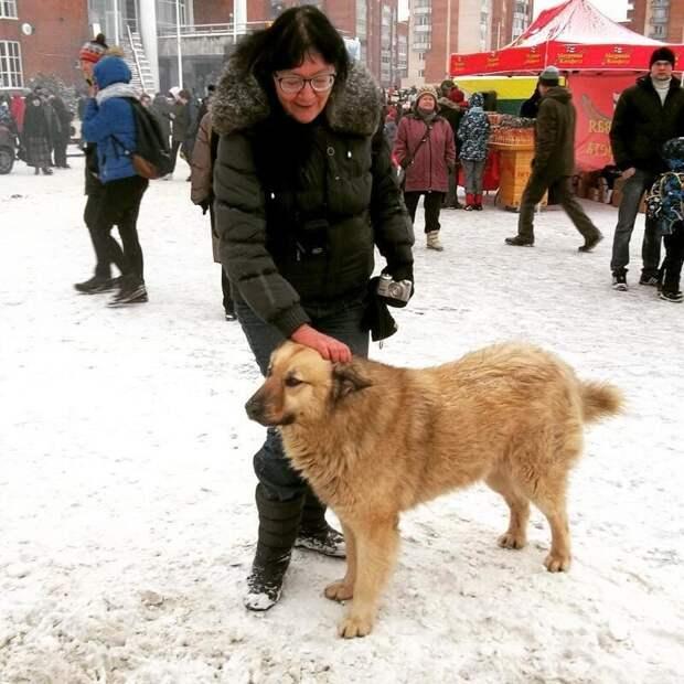 Пёс полюбился жителям города