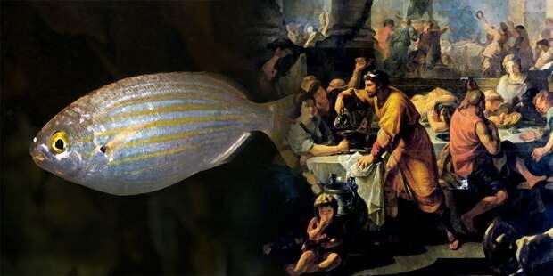 Наркоманы из Древнего Рима: галлюциногенная рыба из античности