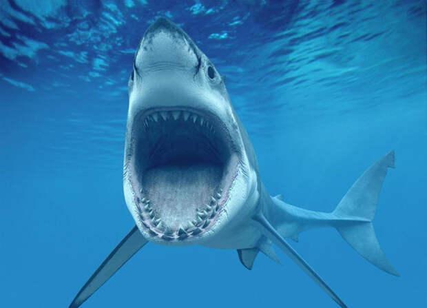 Челюсти: 5 глупых мифов об акулах