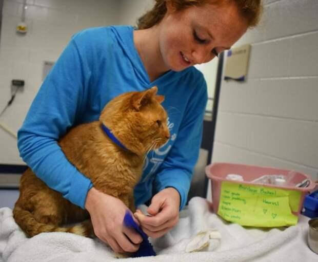 Из-за тяжкого недуга каждый шаг давался коту с болью