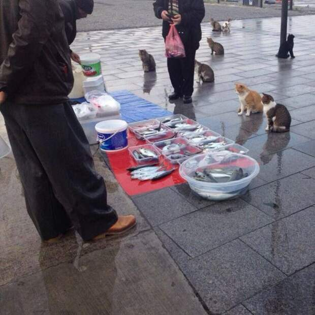 Вы продаете рыбов?