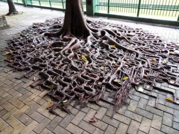 Необычные корни дерева