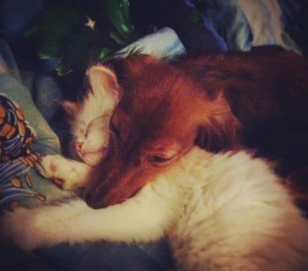 """Фраза """"как кошка с собакой"""" здесь явно не работает дружба, животные, коты, кролик, попугай, собака, черепаха"""