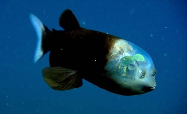 prichudlivieribi 10 10 самых причудливых рыб мирового океана